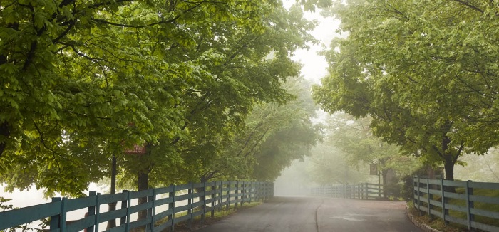 A misty drive leads to Buffalo Trace Distillery in Frankfort, KY