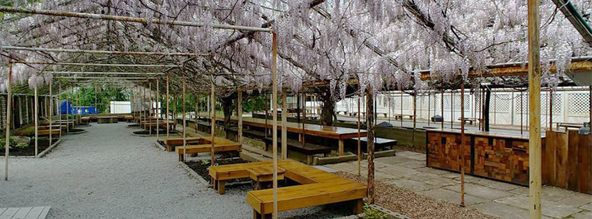 Picnic tables inside a greenhouse with wisteria hanging from the ceiling