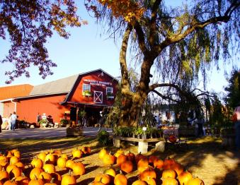 One of BGKY's top fall spots at Jackson's Orchard Photo