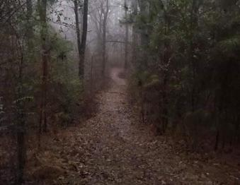 Trail Tours Photo