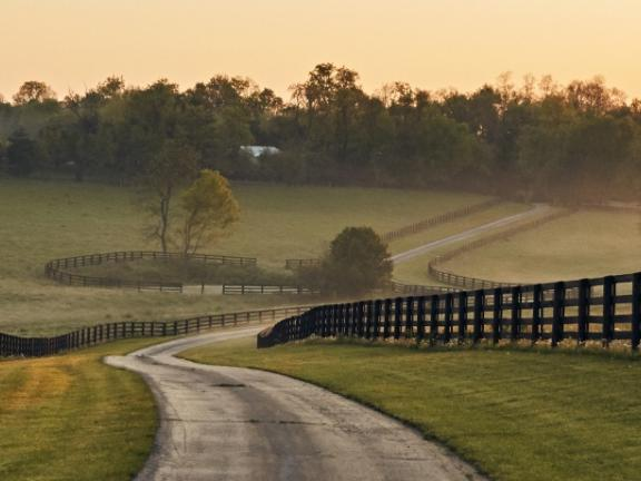 A winding drive, lined with equestrian fencing, leads to misty rolling hills at Gilkinsons Farm in Kentucky