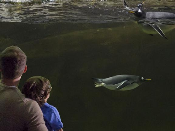 A family looks into the penguin exhibit at Newport Aquarium in the Northern Kentucky River Region