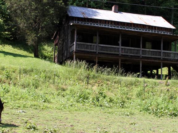 A wide shot of Loretta Lynn's Butcher Holler homeplace, with a horse grazing the field in the foreground