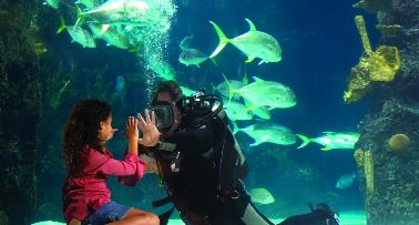 A young girl peers into an aquarium tank at a SCUBA diver to stares back