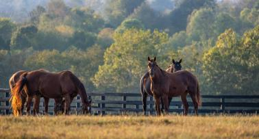 Horses in pasture at Lexington Horse Farm