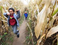 Devine's Farm & Corn Maze,  Zipline Racers & Paintball Field  Photo