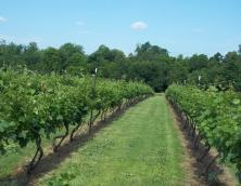 Fancy Farm Vineyard and Winery Photo