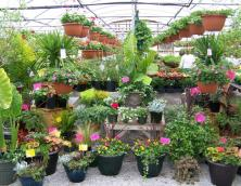 Reva's Greenhouses Photo