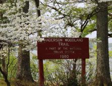 Anderson Woodland Trail Photo