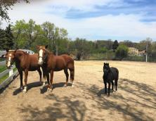 Double J Riding Stables Horseman's Camp Photo