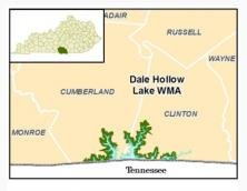 Dale Hollow Lake Wildlife Management Area Photo