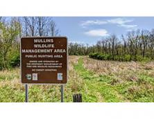 Mullins Wildlife Management Area Photo