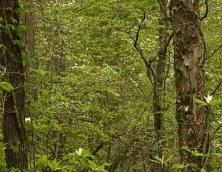 Kentucky Ridge Forest Wildlife Management Area Photo