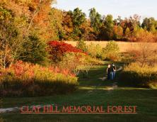 Clay Hill Memorial Forest Photo