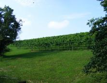 River Valley Winery Photo
