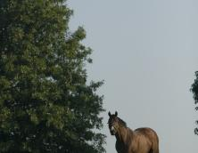 Thoroughbred Heritage Horse Farm Tours Photo