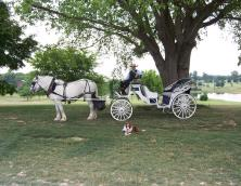 Rockn B Horse Carriage Farm & Mammaw's Kitchen Photo