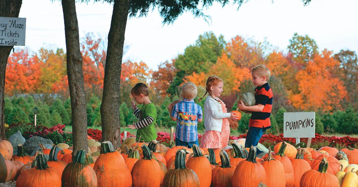 Children in pumpkin patch