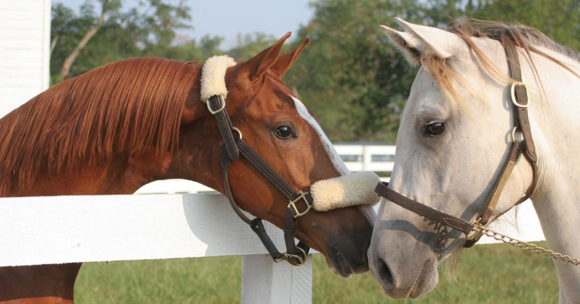 two horses rub noses over a fence