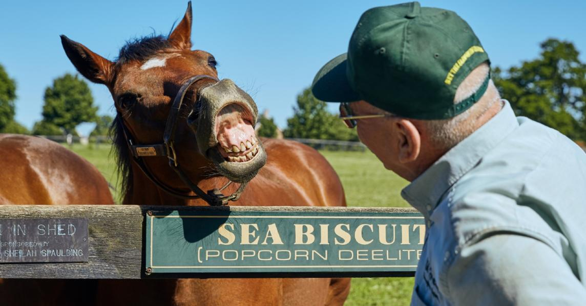 A horse playfully shows his teeth at Old Friends Thoroughbred Retirement farm