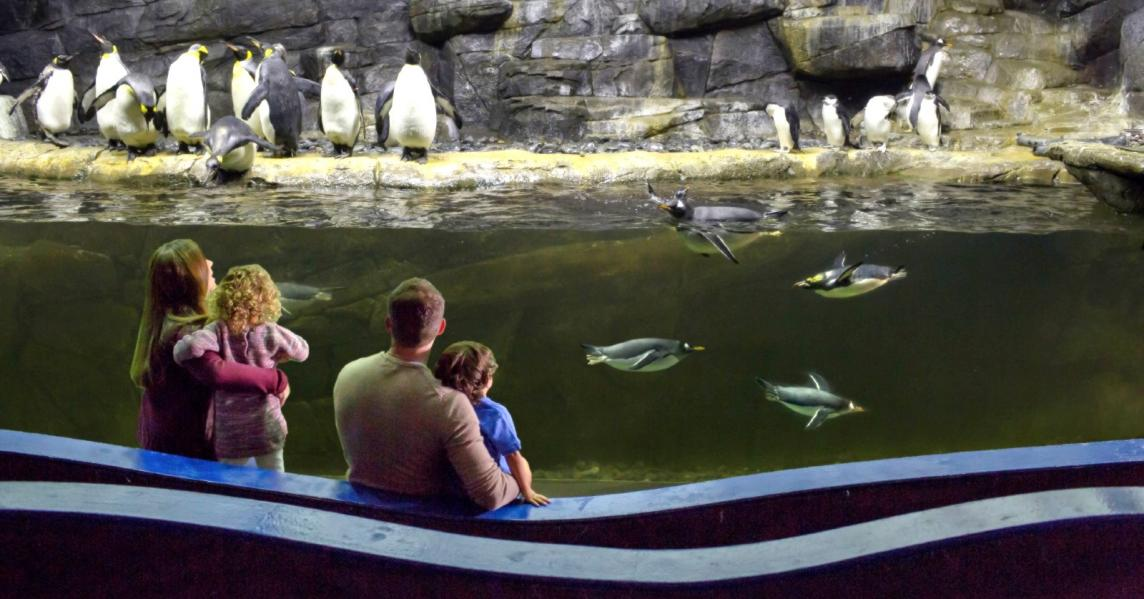 A family views the penguin tank at Newport Aquarium