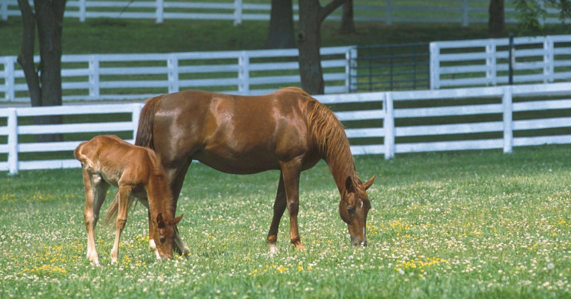 Mare and foal at Kentucky Horse Park paddock