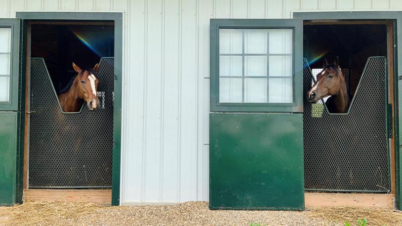 two horses looking at each other in stalls