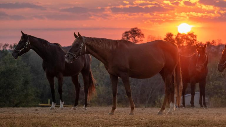 Horses graze in a pasture as the sun sets in Kentucky