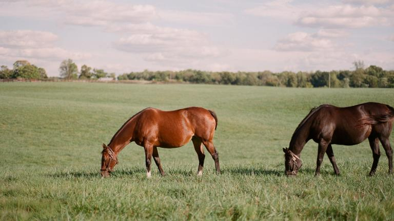 Claiborne Farm horses in pasture