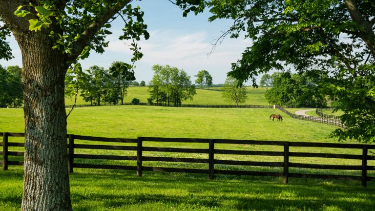 Winstar Farms pasture Versailles KY